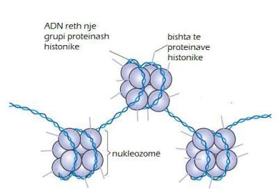 Proteinat histonike dhe roli i tyre